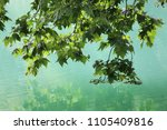 close up outdoor view of the... | Shutterstock . vector #1105409816