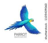 vector parrot. exotic tropical... | Shutterstock .eps vector #1105439060