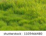 florida saltwater marsh | Shutterstock . vector #1105466480