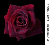 Dark Red Roses Background  Red...
