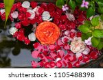 rose leaves floating on the... | Shutterstock . vector #1105488398