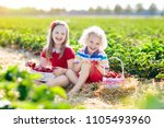 kids picking strawberry on... | Shutterstock . vector #1105493960