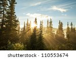 Sunny Beams In Forest