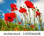 beautiful flowers poppies...   Shutterstock . vector #1105566638