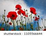 beautiful flowers poppies...   Shutterstock . vector #1105566644