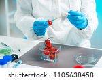biologist examining cherry... | Shutterstock . vector #1105638458