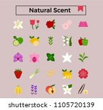 natural scent  flowers and... | Shutterstock .eps vector #1105720139
