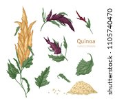 collection of quinoa flowering...   Shutterstock .eps vector #1105740470