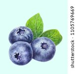 blueberries with leaves... | Shutterstock . vector #1105769669