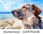 portrait of white  brown and... | Shutterstock . vector #1105792658