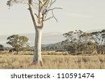 Tasmanian Landscape With...