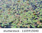 lower spikes and floating... | Shutterstock . vector #1105915040