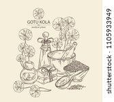 background with gotu kola ... | Shutterstock .eps vector #1105933949