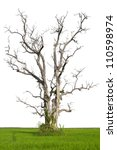 Isolation Of A Dead Tree...