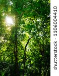 green trees in the forest with... | Shutterstock . vector #1106004410
