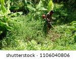 koh krad thailand   june 3 ...   Shutterstock . vector #1106040806