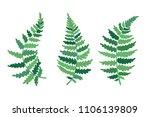 vector botanical illustration... | Shutterstock .eps vector #1106139809