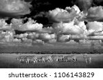 black and white africa. zebras... | Shutterstock . vector #1106143829