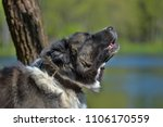 caucasian sheepdog portrait in... | Shutterstock . vector #1106170559