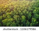 the tops of an oak forest. a... | Shutterstock . vector #1106179586
