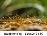 macro ground in the garden with ... | Shutterstock . vector #1106241650