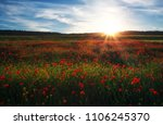 field with red poppies ...   Shutterstock . vector #1106245370