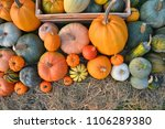 pumpkins and squashes... | Shutterstock . vector #1106289380