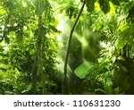 Tropical Forest  Trees In...