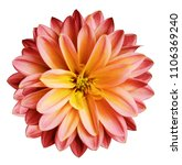 Chrysanthemum Flower Red Yello...