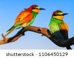 colored birds sit on a dry... | Shutterstock . vector #1106450129