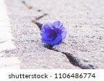 Purple Flowers On A Rocky Floo...