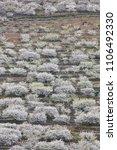 cherry blossom in jerte valley  ... | Shutterstock . vector #1106492330