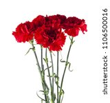 red carnation flowers isolated... | Shutterstock . vector #1106500016