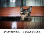 my  cat is shocked. | Shutterstock . vector #1106519156
