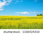 Small photo of Flowering yellow field of agronomic plant rape