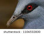 a close up head shot of a bird. ... | Shutterstock . vector #1106532830