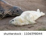 donna nook  lincolnshire  uk  ... | Shutterstock . vector #1106598044