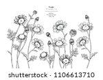 sketch floral botany... | Shutterstock .eps vector #1106613710