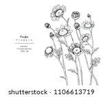 sketch floral botany... | Shutterstock .eps vector #1106613719