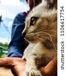 Stock photo natural wild kitten sideways greyish white with big eyes sri lankan kitten tropical kitten 1106617754