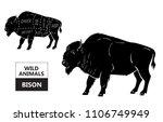 Cut Of Bison Set. Poster...