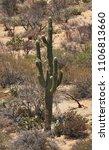 desert cacti sonora | Shutterstock . vector #1106813660