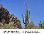desert cacti sonora | Shutterstock . vector #1106813663