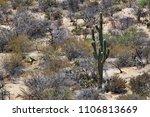desert cacti sonora | Shutterstock . vector #1106813669