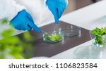 lab technician. plant biology | Shutterstock . vector #1106823584
