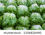 lettuce on street market | Shutterstock . vector #1106826440