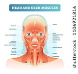 head and neck muscles labeled... | Shutterstock .eps vector #1106921816