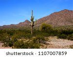 the sonora desert in central... | Shutterstock . vector #1107007859