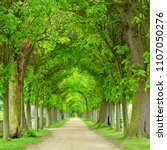tunnel like avenue of linden...