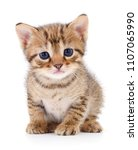 Stock photo small brown kitten isolated on white background 1107065990